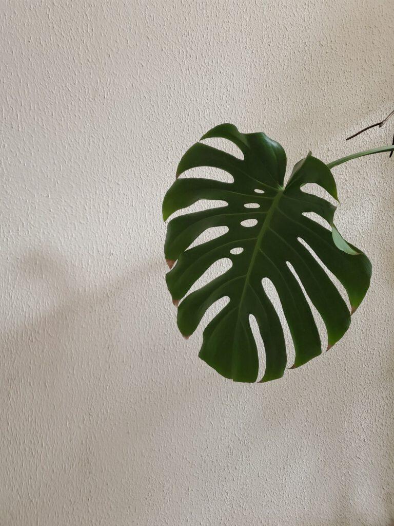 Ein Buchsbaum künstlich ist in vielen Fällen sehr vorteilhaft